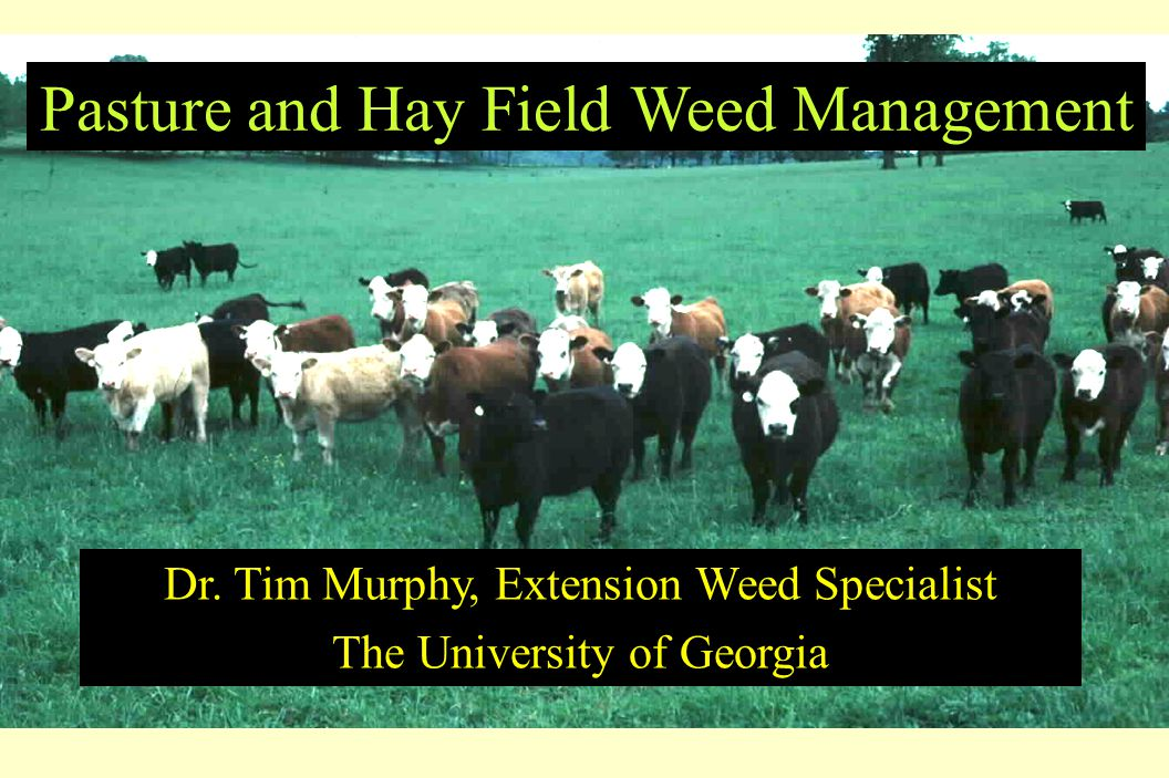 Pasture and Hay Field Weed Management Dr. Tim Murphy, Extension Weed Specialist The University of Georgia