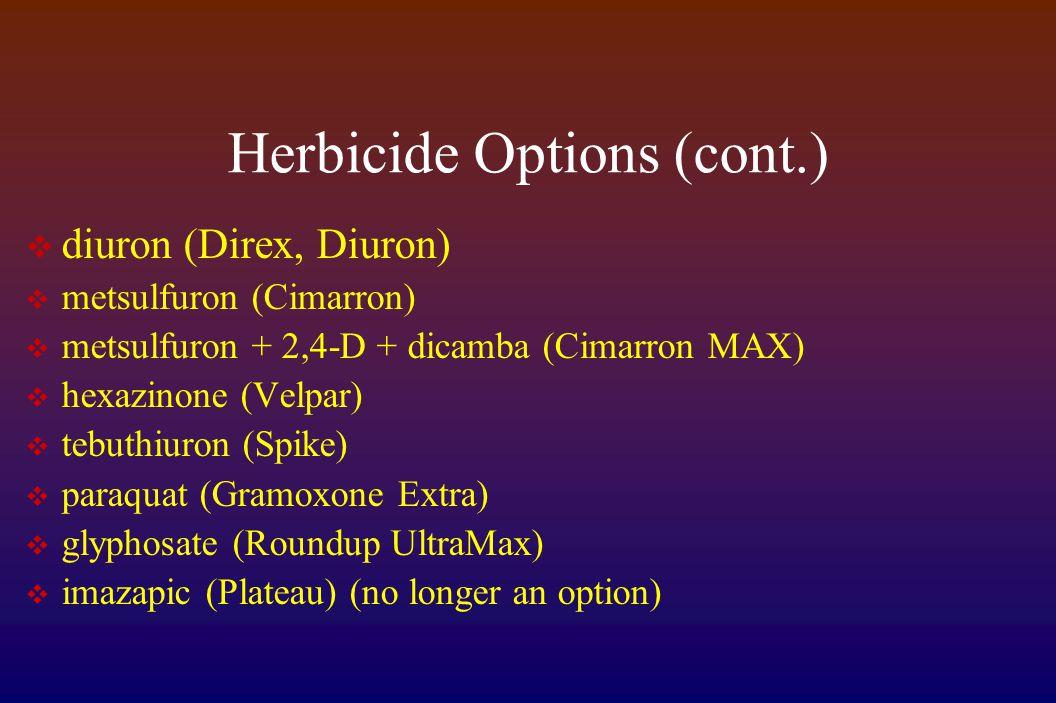 Herbicide Options (cont.)  diuron (Direx, Diuron)  metsulfuron (Cimarron)  metsulfuron + 2,4-D + dicamba (Cimarron MAX)  hexazinone (Velpar)  tebuthiuron (Spike)  paraquat (Gramoxone Extra)  glyphosate (Roundup UltraMax)  imazapic (Plateau) (no longer an option)