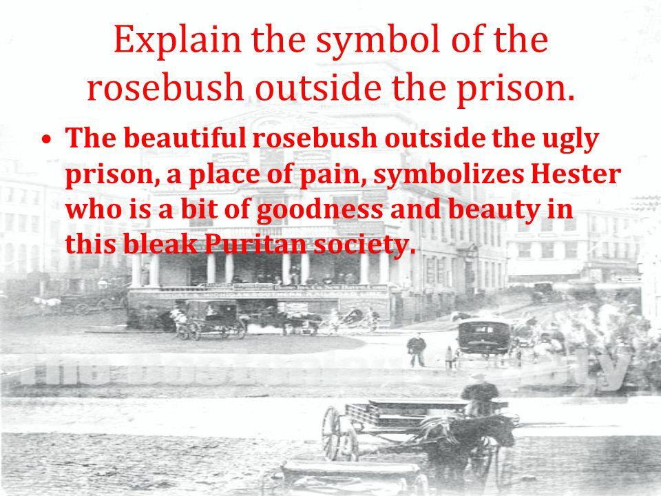 Explain the symbol of the rosebush outside the prison.