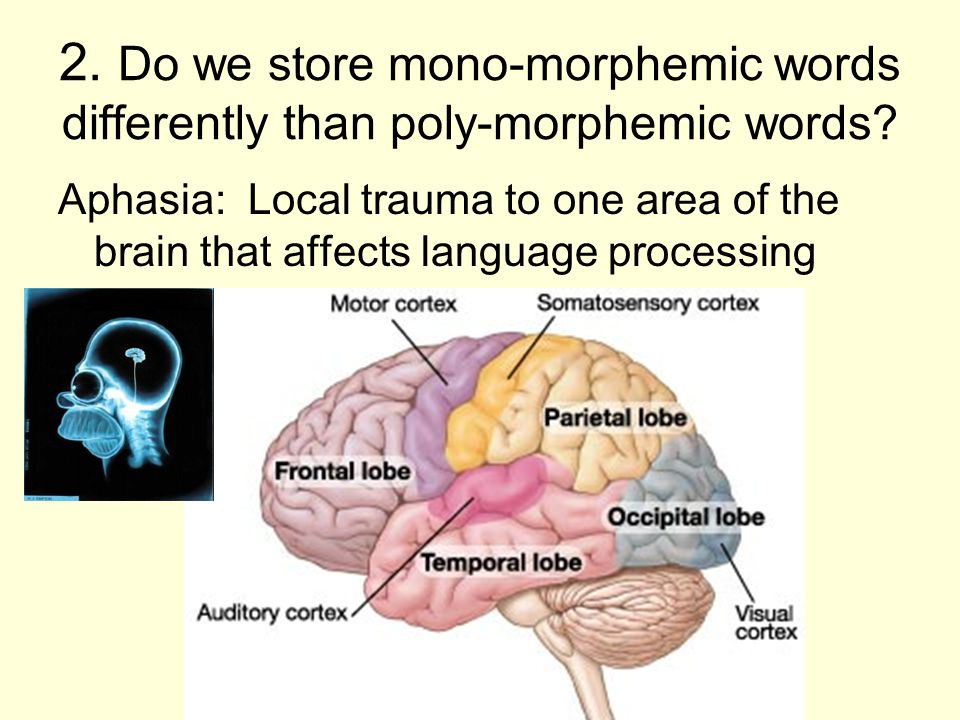 2. Do we store mono-morphemic words differently than poly-morphemic words.