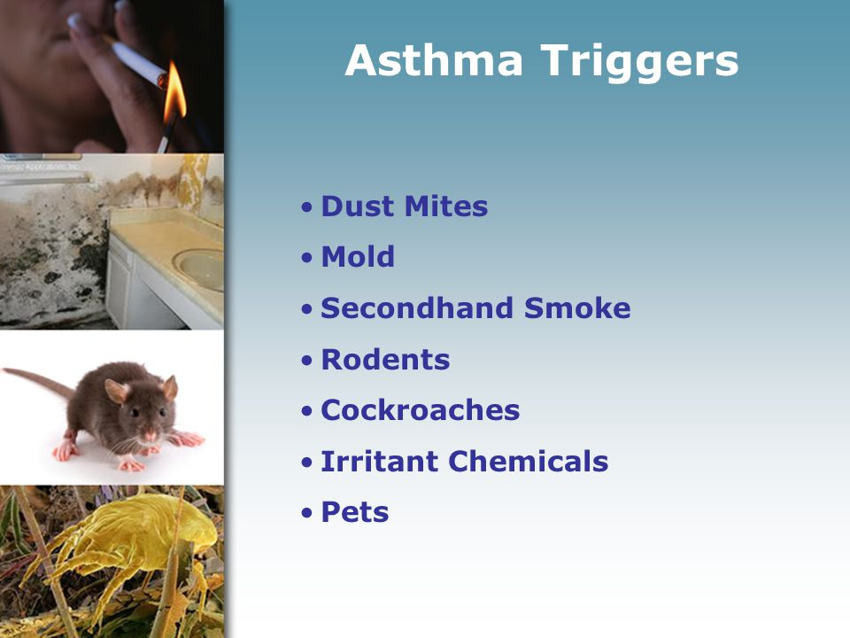 Asthma Triggers Dust Mites Mold Secondhand Smoke Rodents Cockroaches Irritant Chemicals Pets