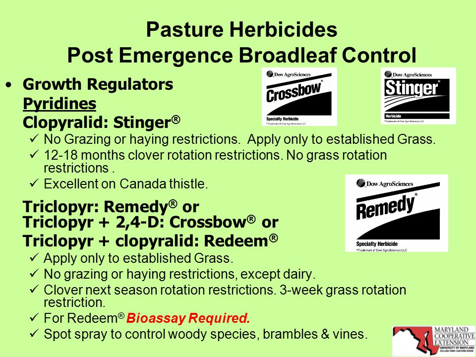 Pasture Herbicides Post Emergence Broadleaf Control Growth Regulators Pyridines Clopyralid: Stinger ® No Grazing or haying restrictions.