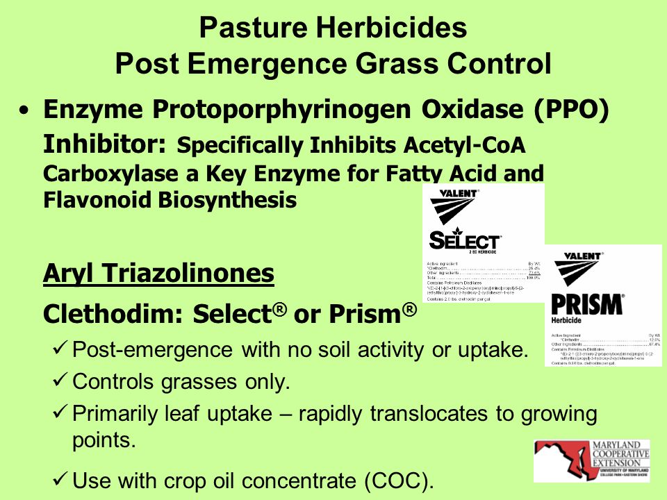 Pasture Herbicides Post Emergence Grass Control Enzyme Protoporphyrinogen Oxidase (PPO) Inhibitor: Specifically Inhibits Acetyl-CoA Carboxylase a Key Enzyme for Fatty Acid and Flavonoid Biosynthesis Aryl Triazolinones Clethodim: Select ® or Prism ® Post-emergence with no soil activity or uptake.