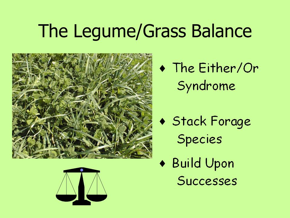 The Legume/Grass Balance