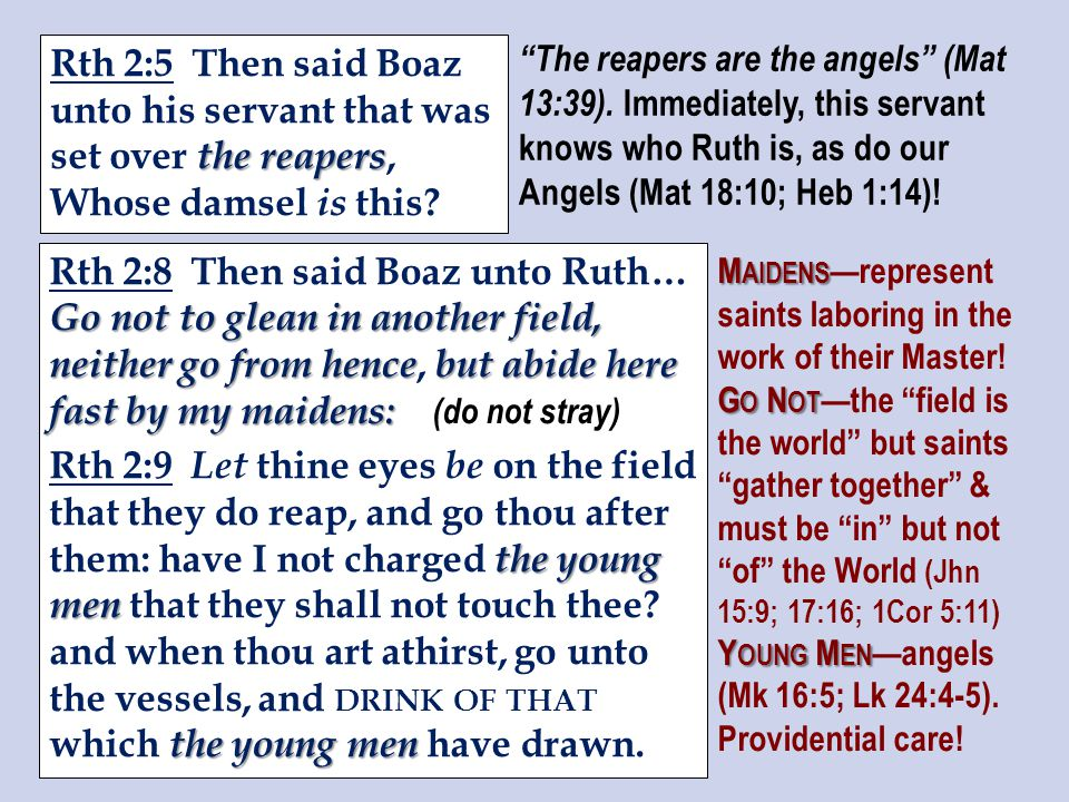 the reapers Rth 2:5 Then said Boaz unto his servant that was set over the reapers, Whose damsel is this.