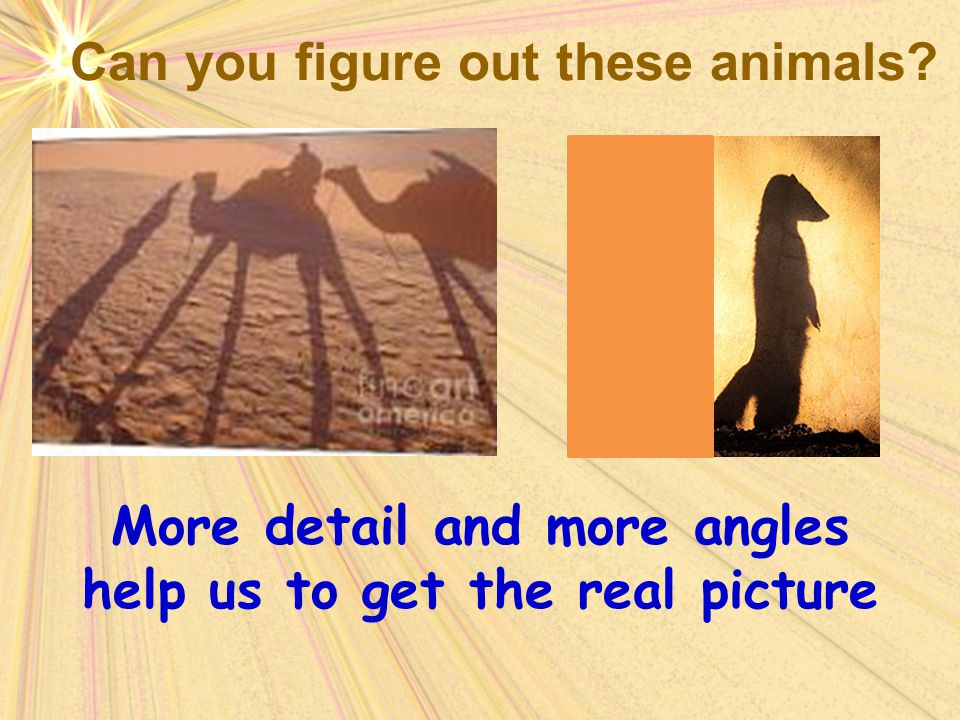 Can you figure out these animals? More detail and more angles help us to get the real picture