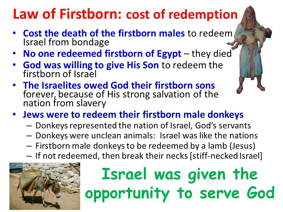 Law of Firstborn: cost of redemption Cost the death of the firstborn males to redeem Israel from bondage No one redeemed firstborn of Egypt – they died God was willing to give His Son to redeem the firstborn of Israel The Israelites owed God their firstborn sons forever, because of His strong salvation of the nation from slavery Jews were to redeem their firstborn male donkeys – Donkeys represented the nation of Israel, God's servants – Donkeys were unclean animals: Israel was like the nations – Firstborn male donkeys to be redeemed by a lamb (Jesus) – If not redeemed, then break their necks [stiff-necked Israel] Israel was given the opportunity to serve God