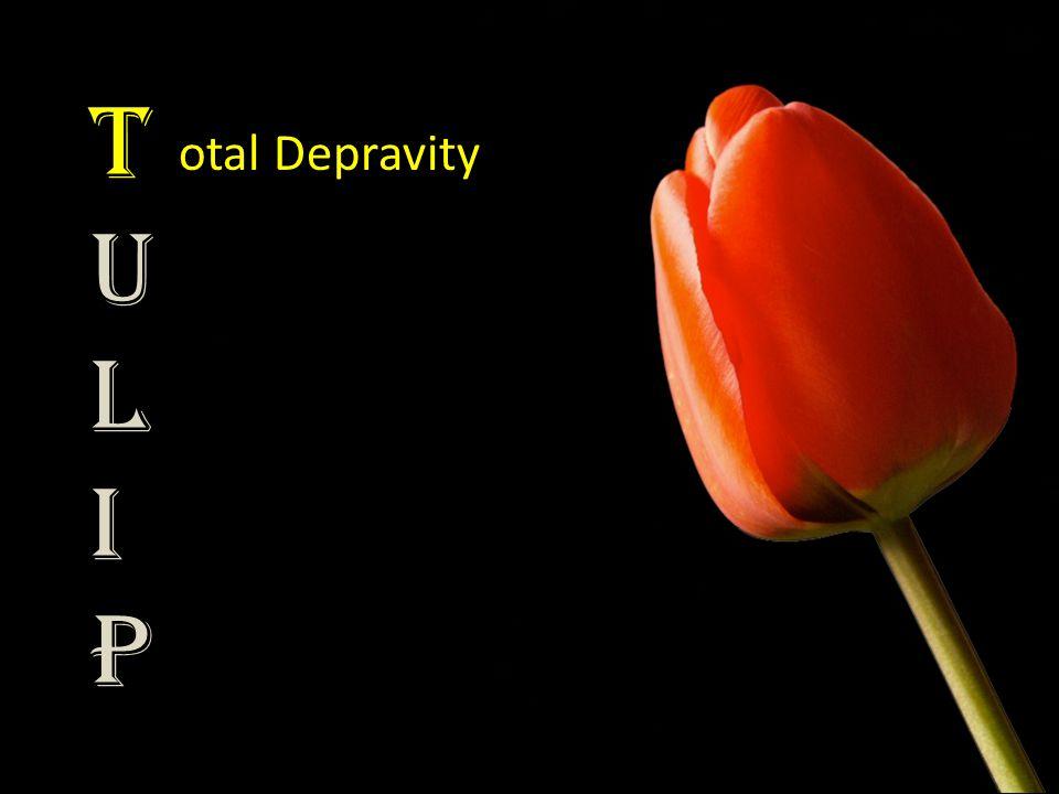 TULIPTULIP otal Depravity