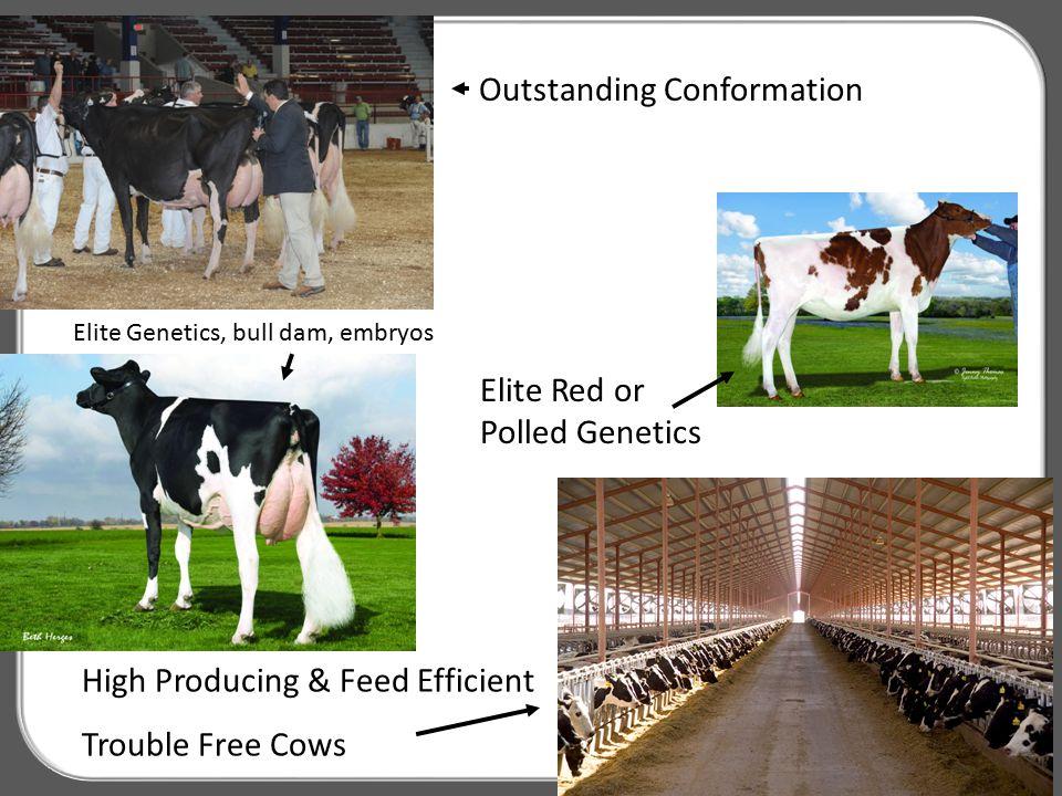 B&W Holstein Bulls by Quartile Delivered Not Yet Sampled MAY 2 ND 2013 350 bullsAvg GTPIAvg GNM$Range ALL Bulls+2334+729 TPI NM$ 1 st Q+2453+846 2570 983 2395 798 2 nd Q+2369+761 2393 797 2345 731 3 rd Q+2303+703 2344 730 2367 671 4 th Q+2215+608 <2266 <670