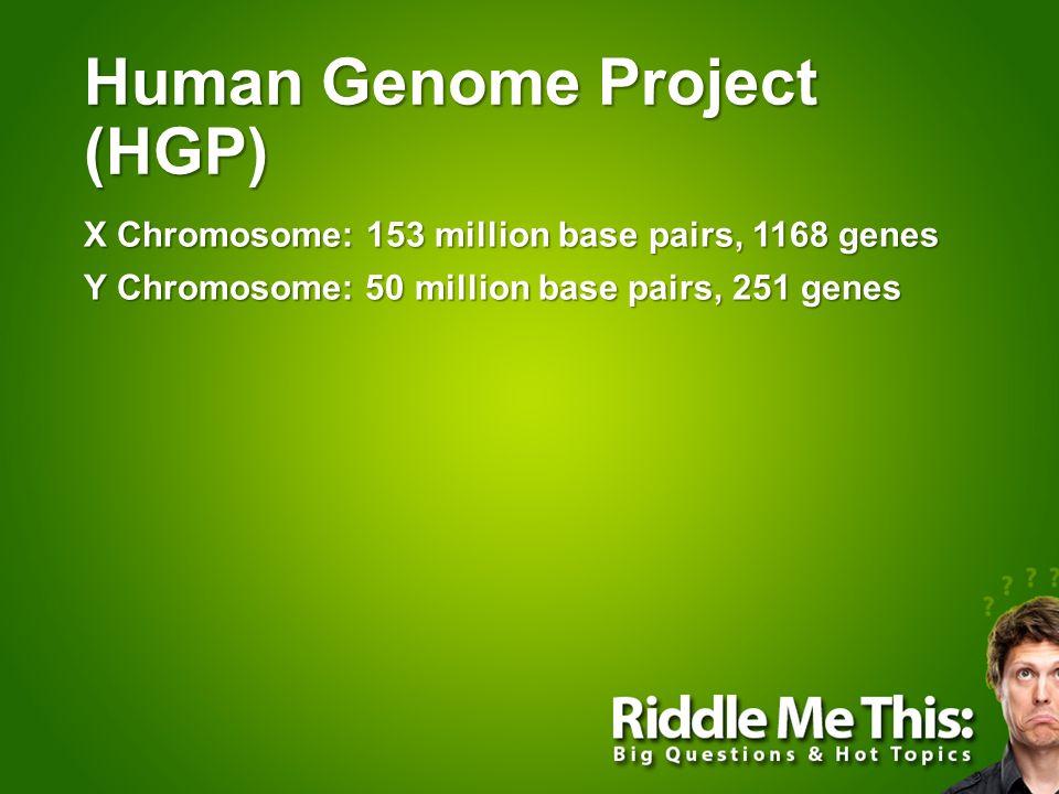 Human Genome Project (HGP) X Chromosome: 153 million base pairs, 1168 genes Y Chromosome: 50 million base pairs, 251 genes