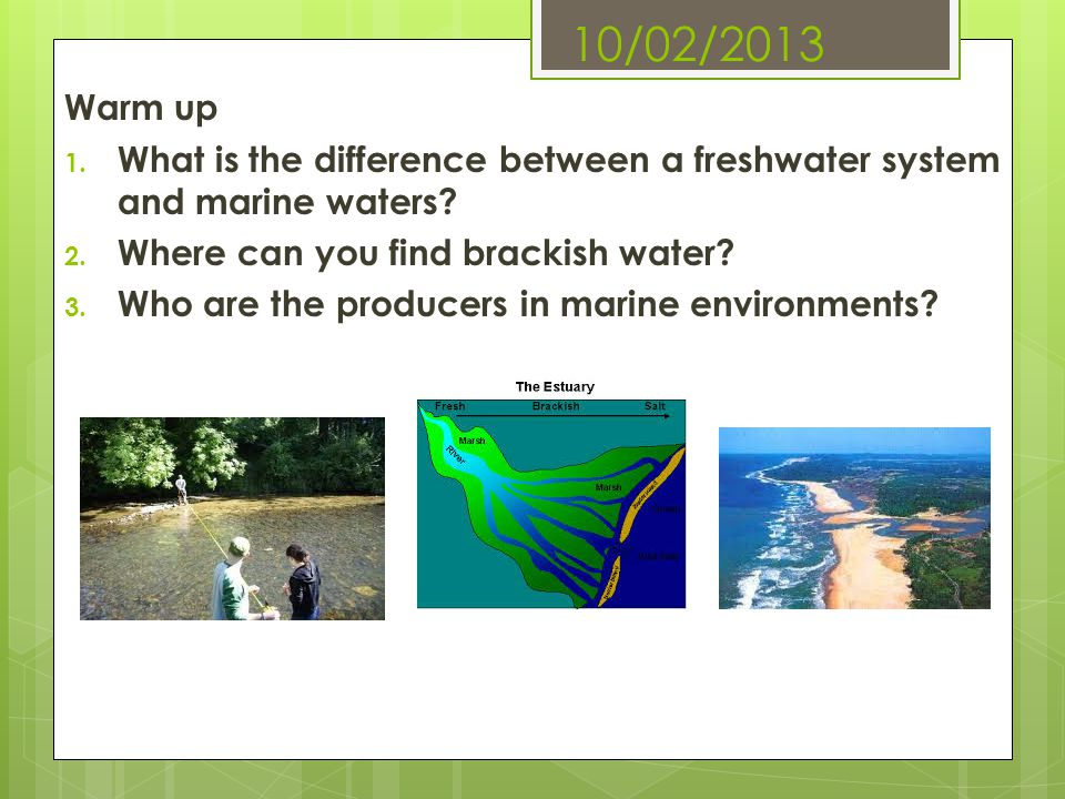 10/02/2013 Warm up 1. What is the difference between a freshwater system and marine waters? 2. Where can you find brackish water? 3. Who are the produ