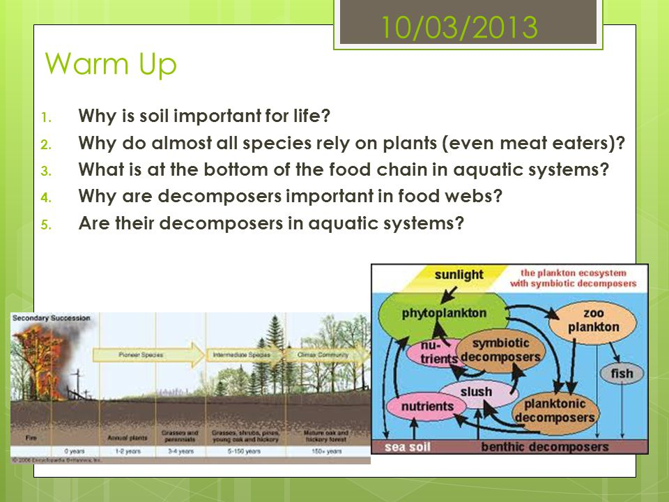 10/03/2013 Warm Up 1. Why is soil important for life? 2. Why do almost all species rely on plants (even meat eaters)? 3. What is at the bottom of the