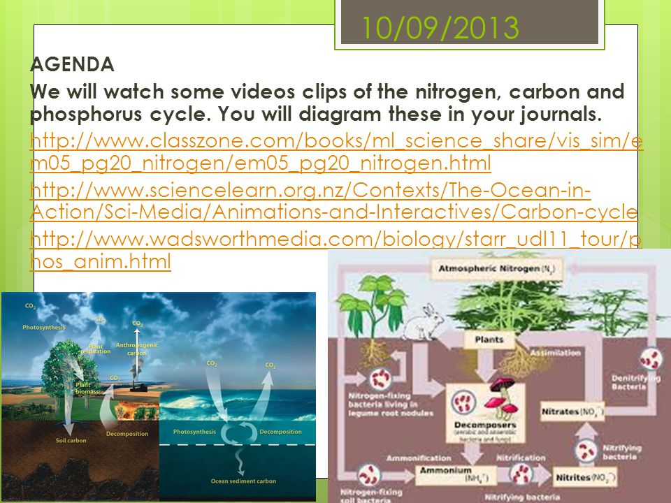 10/09/2013 AGENDA We will watch some videos clips of the nitrogen, carbon and phosphorus cycle. You will diagram these in your journals. http://www.cl