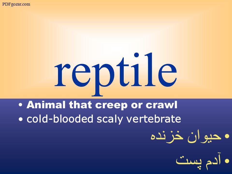 reptile Animal that creep or crawl cold-blooded scaly vertebrate حيوان خزنده آدم پست PDFgozar.com