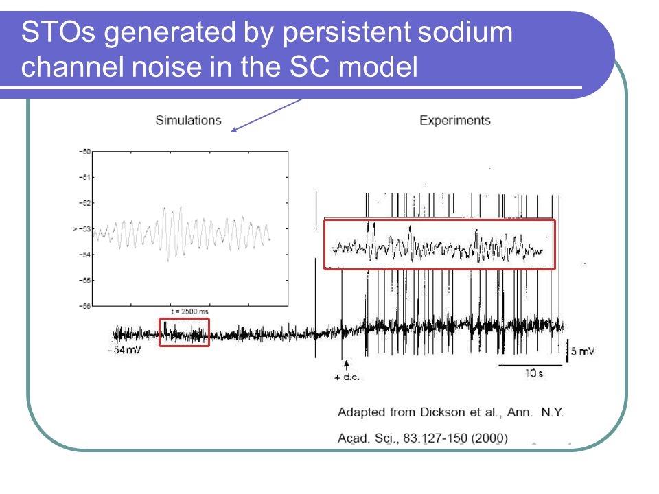 STOs generated by persistent sodium channel noise in the SC model