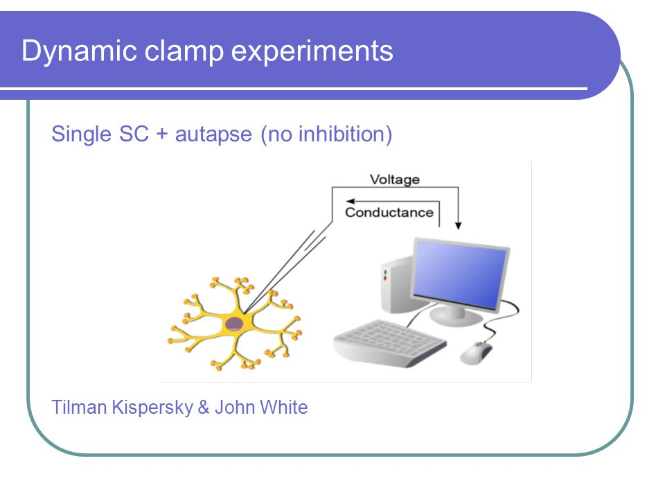 Single SC + autapse (no inhibition) Tilman Kispersky & John White Dynamic clamp experiments