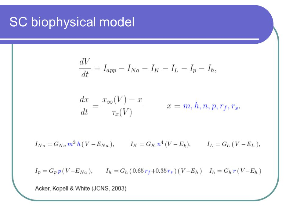 SC biophysical model