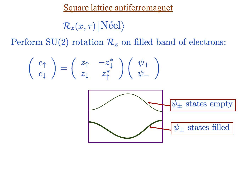 Square lattice antiferromagnet