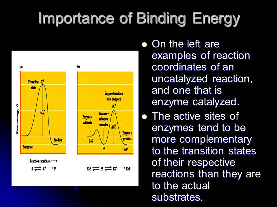 Importance of Binding Energy On the left are examples of reaction coordinates of an uncatalyzed reaction, and one that is enzyme catalyzed. On the lef