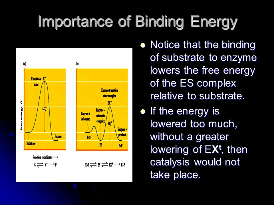 Importance of Binding Energy Notice that the binding of substrate to enzyme lowers the free energy of the ES complex relative to substrate. Notice tha