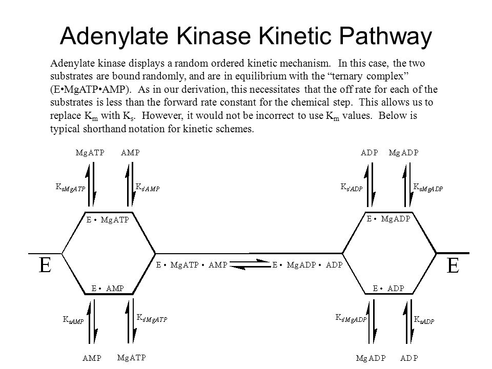 Adenylate Kinase Kinetic Pathway Adenylate kinase displays a random ordered kinetic mechanism. In this case, the two substrates are bound randomly, an
