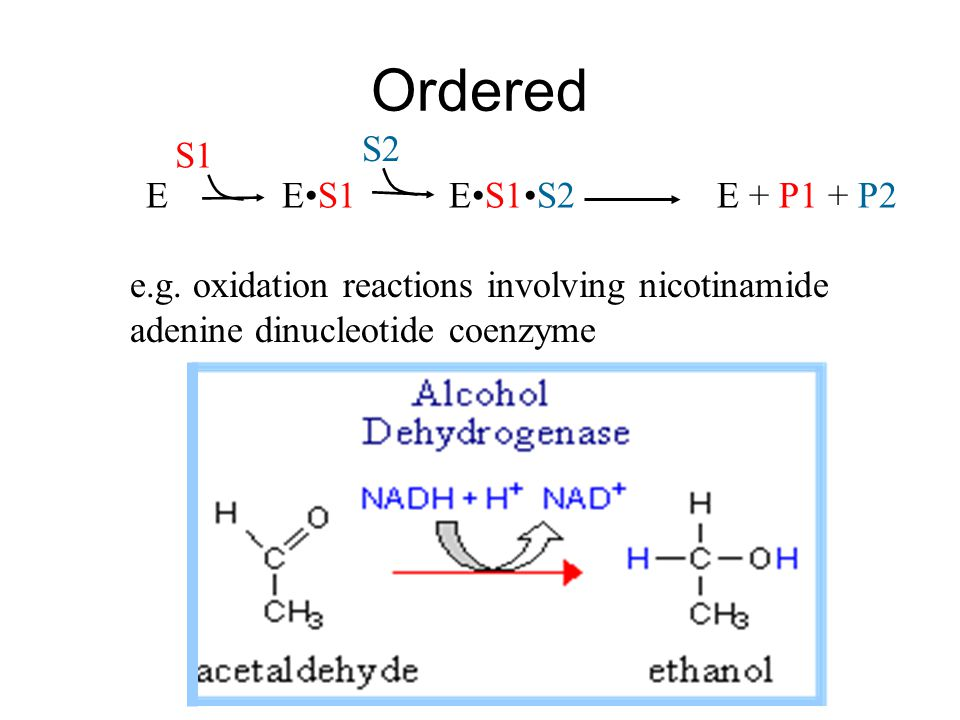 Ordered E ES1S2 E + P1 + P2ES1 S2 S1 e.g. oxidation reactions involving nicotinamide adenine dinucleotide coenzyme
