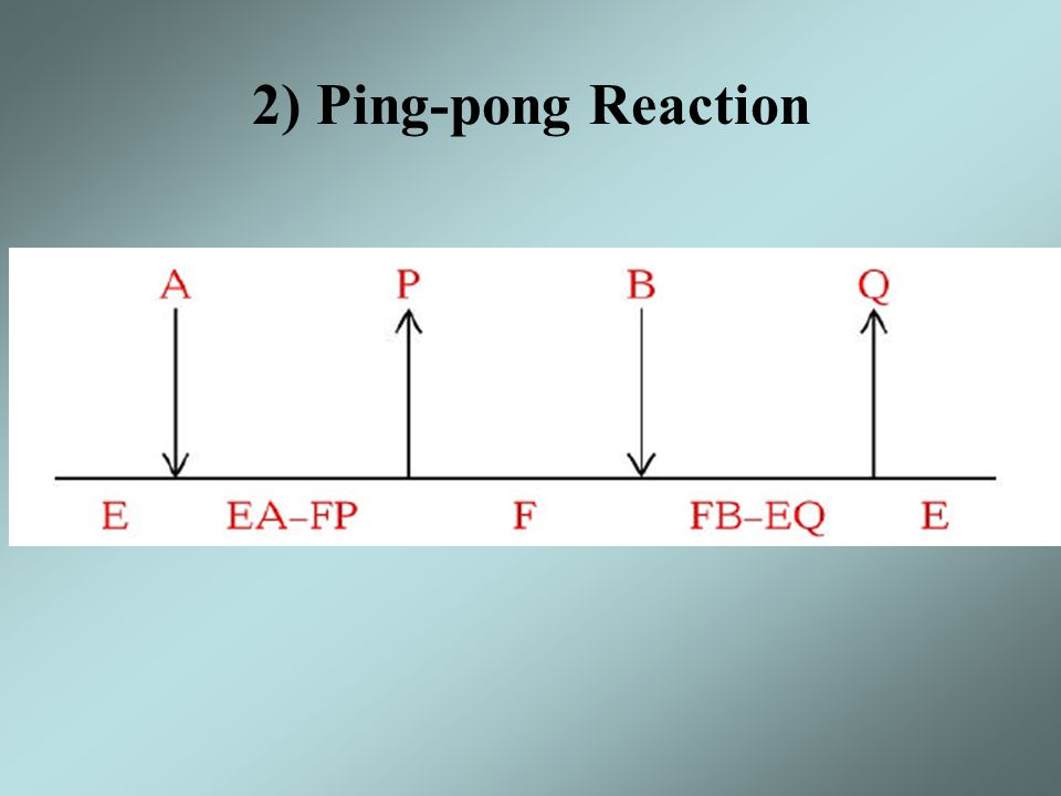 Initial Velocity Plots sequential reaction exhibits an intersecting pattern of lines Order and random substrate additions cannot be distinguished in this type of plot Ping-pong reaction shows parallel or non- intersecting lines