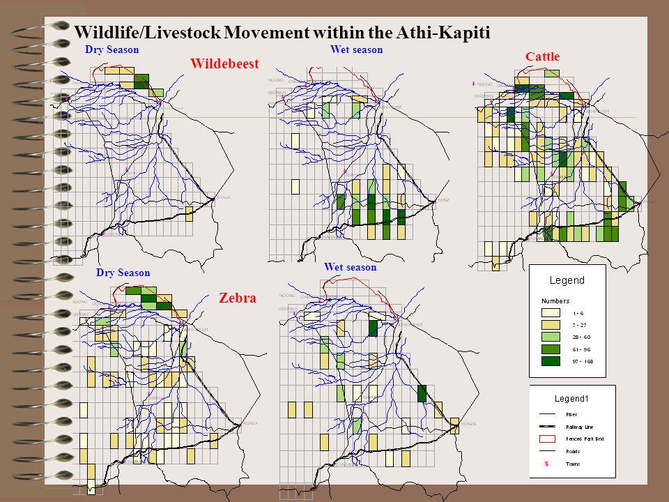 Wildebeest Zebra Wet season Dry Season Cattle Wildlife/Livestock Movement within the Athi-Kapiti