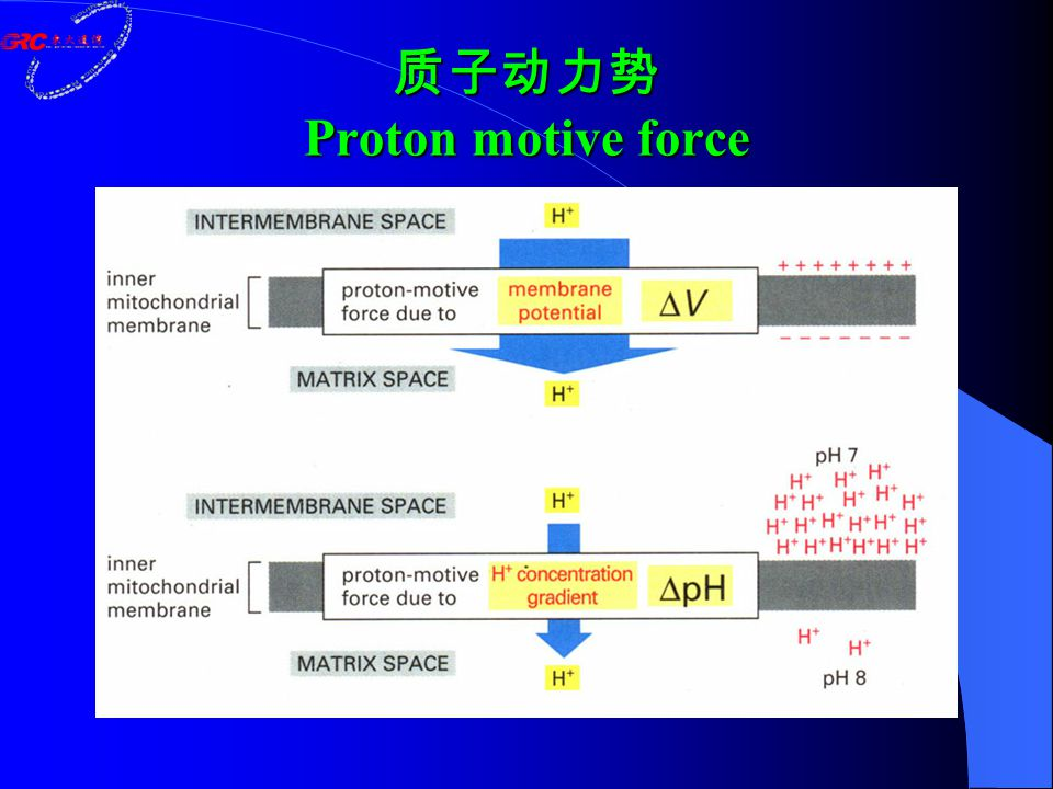 质子动力势 Proton motive force
