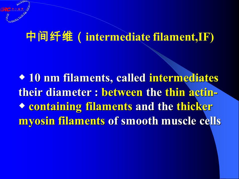 中间纤维( intermediate filament,IF) 10 nm filaments, called intermediates ◆ 10 nm filaments, called intermediates their diameter : between the thin actin- containing filaments and the thicker myosin filaments of smooth muscle cells their diameter : between the thin actin- ◆ containing filaments and the thicker myosin filaments of smooth muscle cells