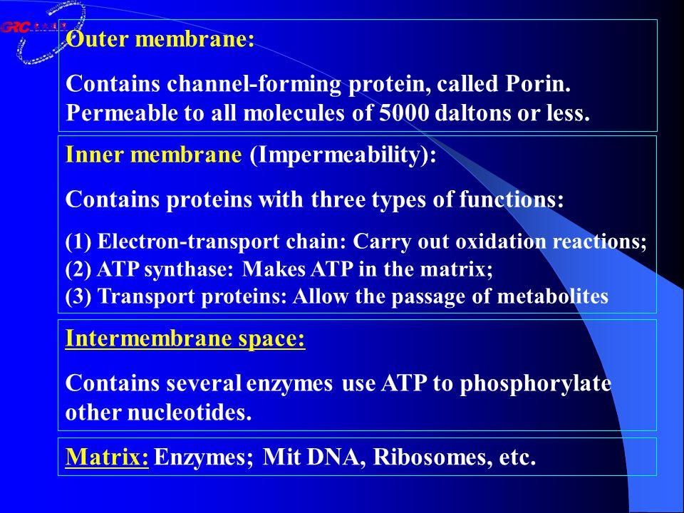 Molecular basis of oxidative phosphorylation 线粒体的结构 Mitochondrial function