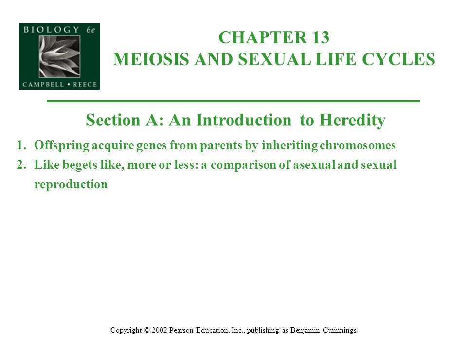 CHAPTER 13 MEIOSIS AND SEXUAL LIFE CYCLES Copyright © 2002 Pearson Education, Inc., publishing as Benjamin Cummings Section A: An Introduction to Heredity 1.Offspring acquire genes from parents by inheriting chromosomes 2.Like begets like, more or less: a comparison of asexual and sexual reproduction