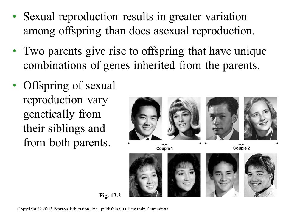 Sexual reproduction results in greater variation among offspring than does asexual reproduction.