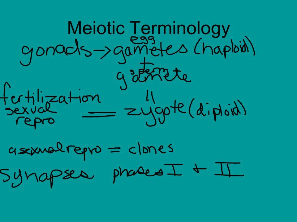 Meiotic Terminology