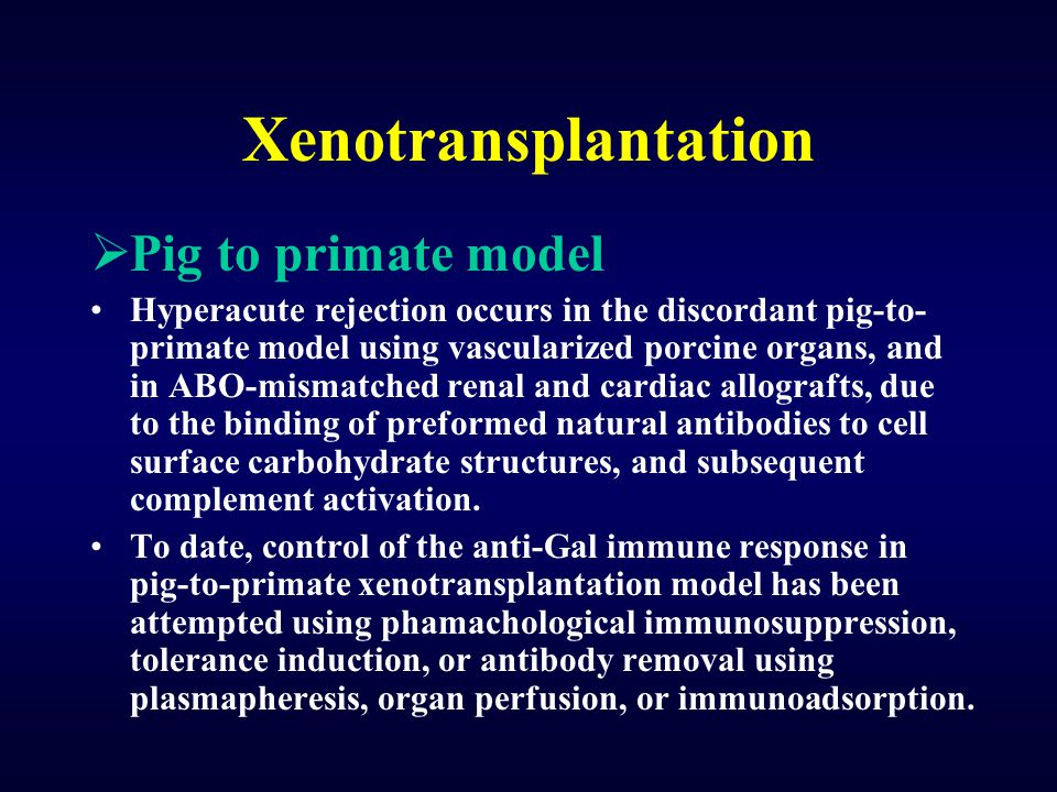 Xenotransplantation  Pig to primate model Hyperacute rejection occurs in the discordant pig-to- primate model using vascularized porcine organs, and