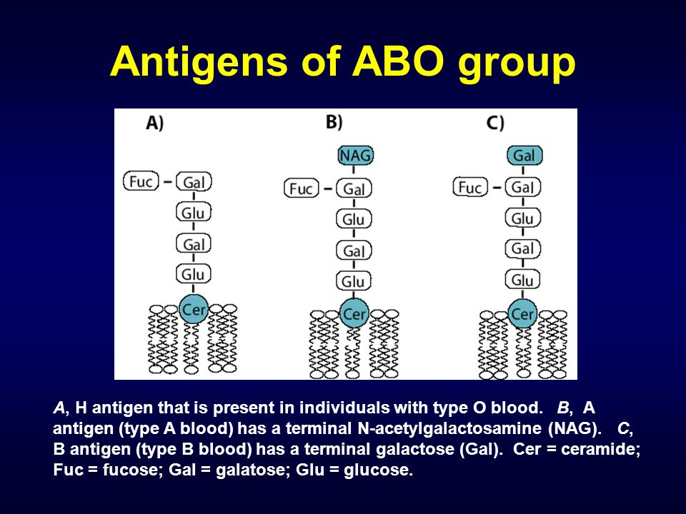 Antigens of ABO group A, H antigen that is present in individuals with type O blood. B, A antigen (type A blood) has a terminal N-acetylgalactosamine