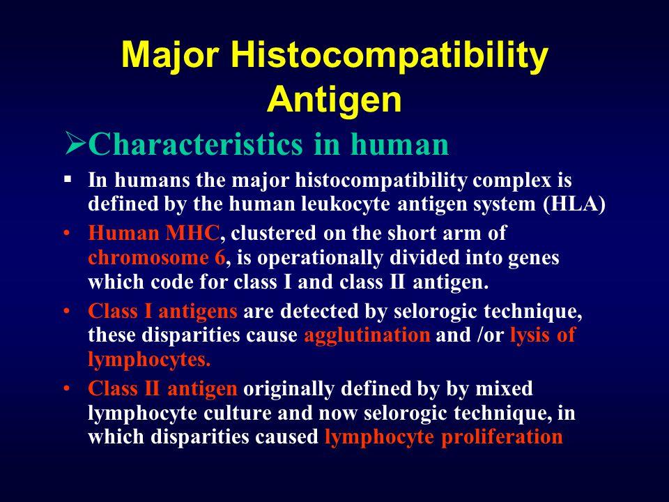 Major Histocompatibility Antigen  Characteristics in human  In humans the major histocompatibility complex is defined by the human leukocyte antigen