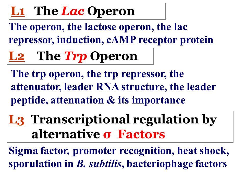 Control element Structural genes