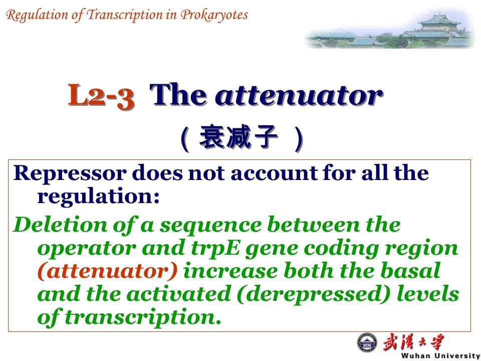 L2: The trp operon trpR operon trp operon