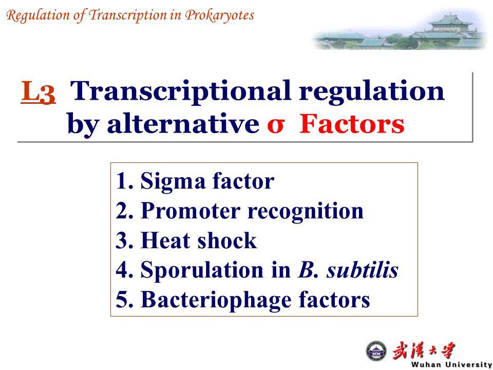Negative control Positive control Repression Corepressor 负控阻遏系统正控阻遏系统