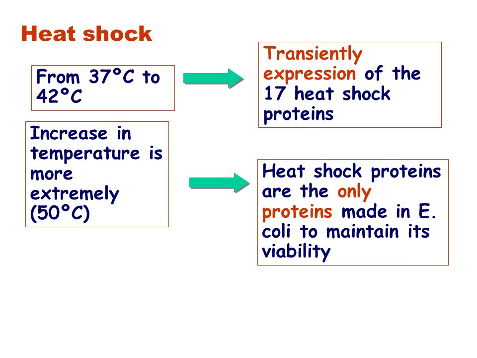 Comparison of the heat-shock  32 and general  70 responsive promoter Consensus promoter –35 sequence –10 sequence Standard  70 Heat shock  32 ----