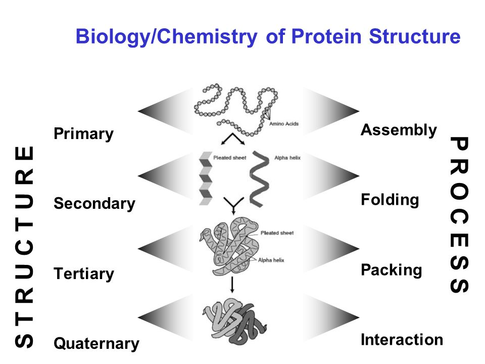 Biology/Chemistry of Protein Structure Primary Secondary Tertiary Quaternary Assembly Folding Packing Interaction S T R U C T U R E P R O C E S S
