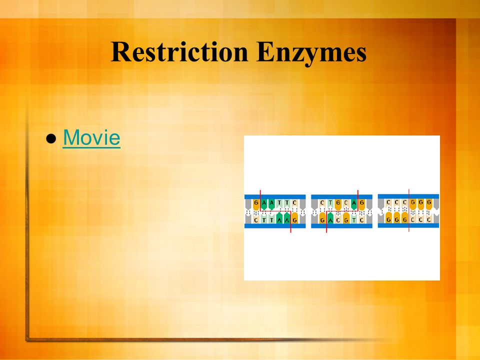Gene Cloning in Plasmids Genes are cloned in plasmids using a cloning vector which is the original plasmid that carries the foreign DNA into the cell.