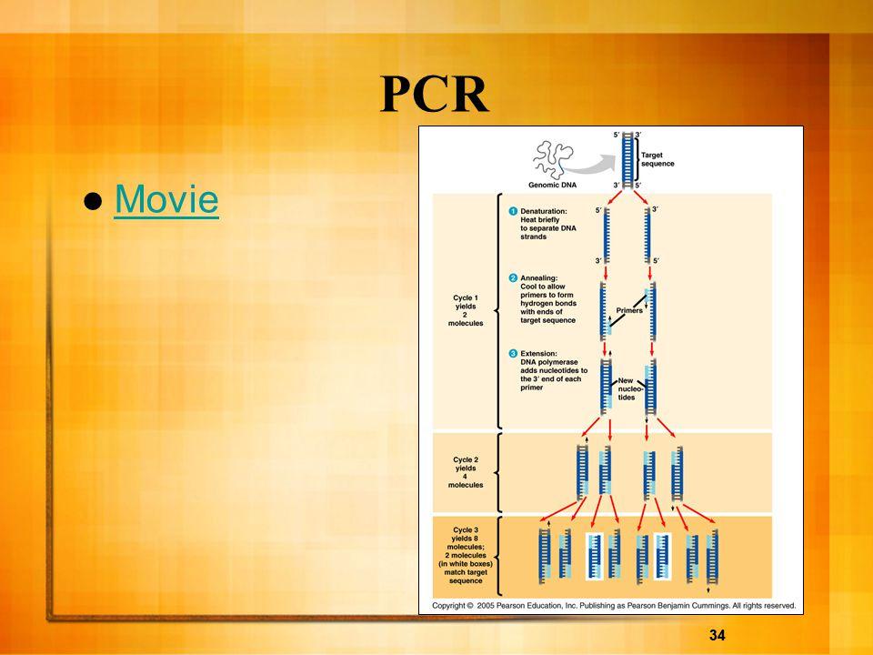 34 PCR Movie 34