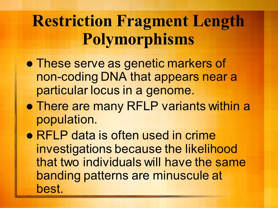 Scientists use a Southern Blot to Analyze RFLPs or Regular DNA.