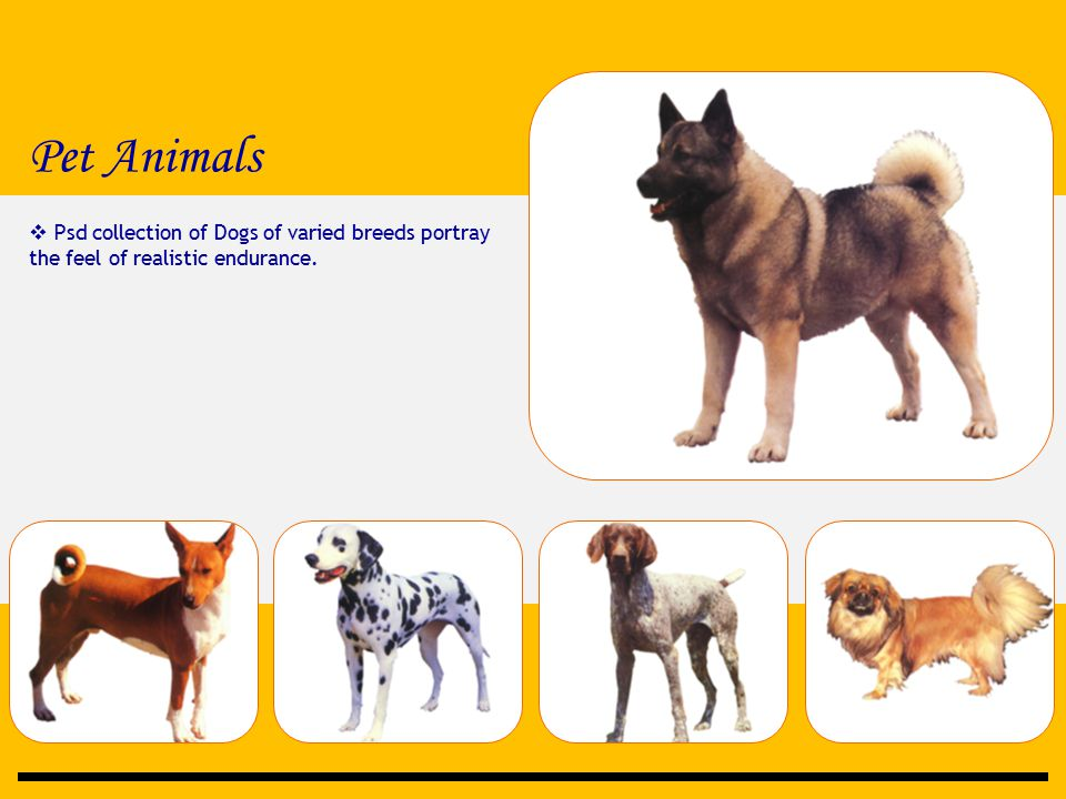 Pet Animals  Psd collection of Dogs of varied breeds portray the feel of realistic endurance.
