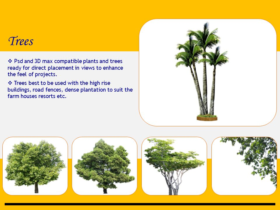 Trees  Psd and 3D max compatible plants and trees ready for direct placement in views to enhance the feel of projects.