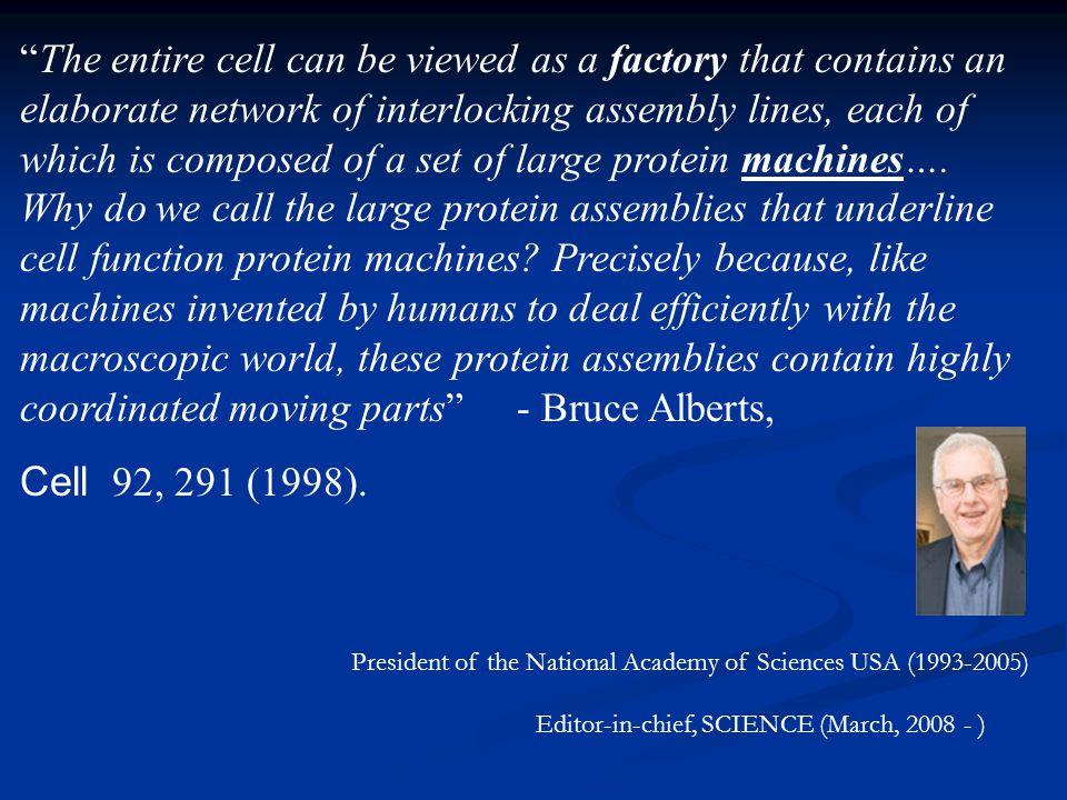 Examples of molecular motors III: Membrane-associated Rotary Motors