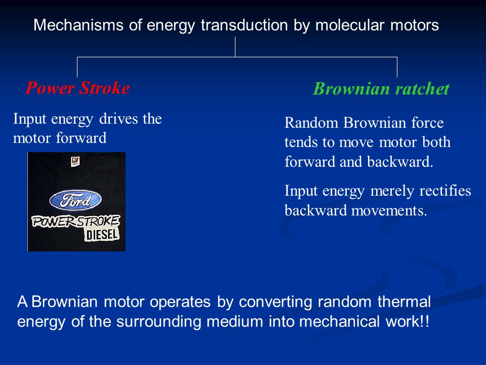 Brownian ratchet Power Stroke Input energy drives the motor forward Random Brownian force tends to move motor both forward and backward. Input energy