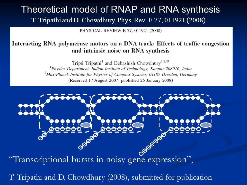 "T. Tripathi and D. Chowdhury, Phys. Rev. E 77, 011921 (2008) Theoretical model of RNAP and RNA synthesis ""Transcriptional bursts in noisy gene express"